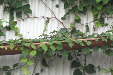 130930_natural_planter.jpg