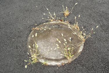 131002_pampas_grass.jpg