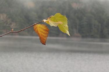 131007_autumn_leaves.jpg