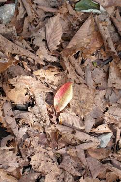 131008_autumn_leaf.jpg