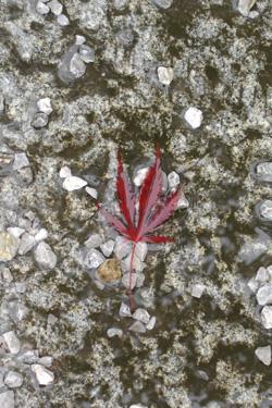 131011_autumn_leaf.jpg