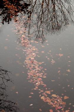 131012_autumn_leaves_b.jpg