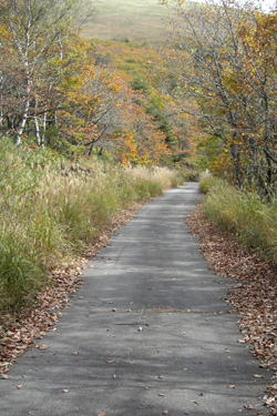 131020_autumn_path.jpg