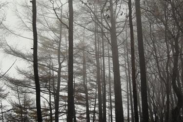 131024_foggy_forest.jpg