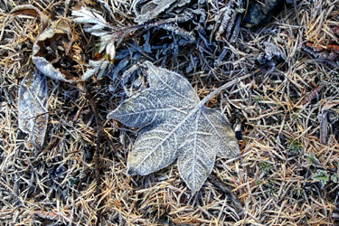 131028_d_frozen_leaf.jpg