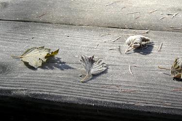 131028_frozen_leaves.jpg