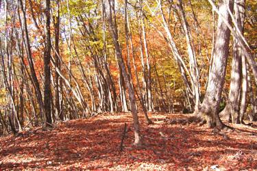 131106_autumn_forest.jpg