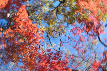 131107_autumn_leaves.jpg