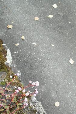 131110_flower.jpg