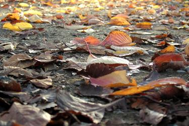 131111_autumn_leaves.jpg