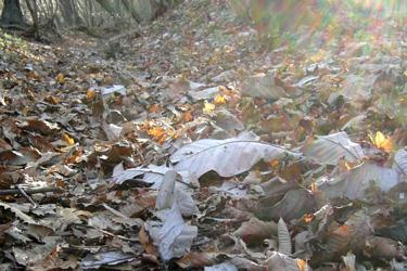 131116_dead_leaves.jpg