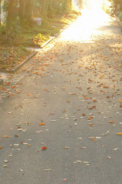 131122_sunset_path.jpg
