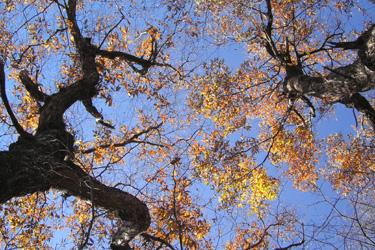 131123_trees.jpg