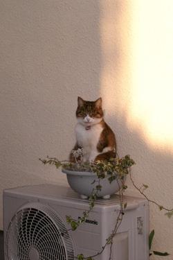 131124_cat_planter.jpg