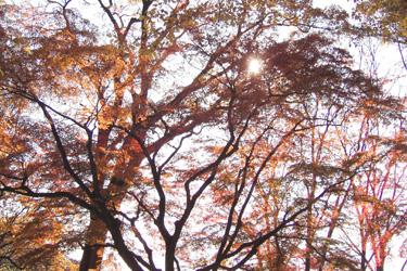 131129_autumn_trees.jpg