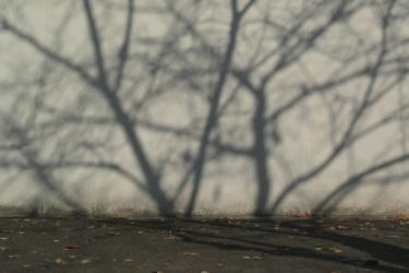 131203_shadow.jpg