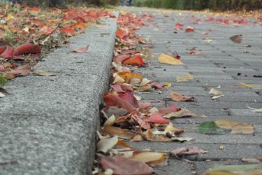 131206_fallen_leaves.jpg