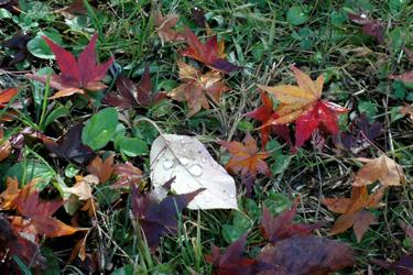 131207_fallen_dead_leaves.jpg