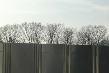 131230_trees.jpg