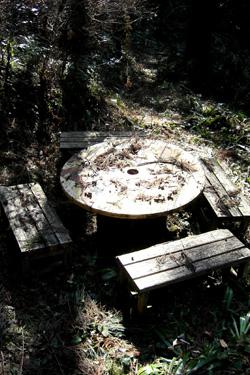140116_forest.jpg