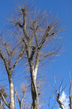 140125_trees.jpg