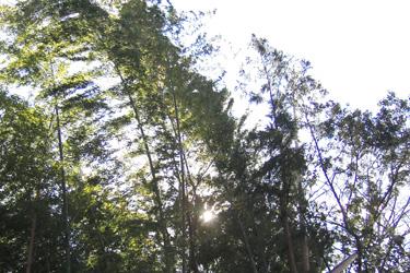 140128_bamboo.jpg