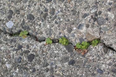 140219_natural_planter.jpg