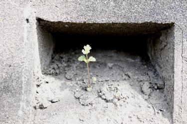 140309_natural_planter.jpg