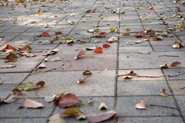 140313_dancing_dead_leaves.jpg