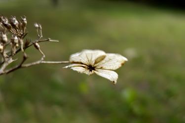 140315_dead_flower.jpg