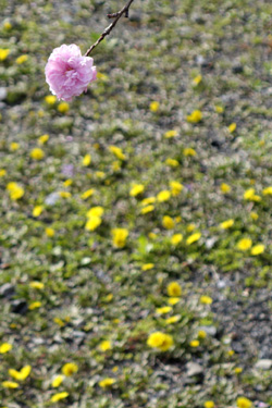 140319_pink_&_yellow.jpg