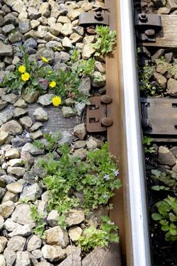 140420_dandelions_railway.jpg