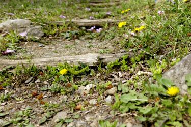 140421_dandelions_steps.jpg
