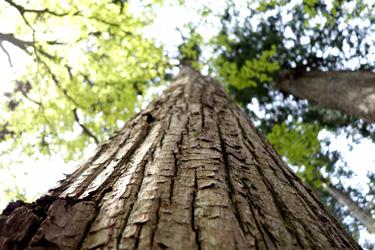 140426_tree.jpg
