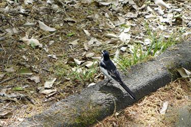 140429_bird.jpg