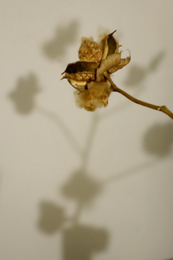 140430_dried_flower.jpg