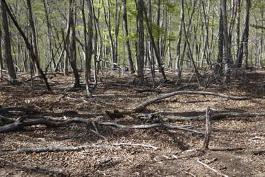 140503_forest.jpg
