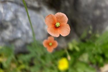 140519_poppy.jpg
