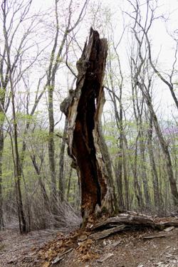 140520_broken_tree.jpg