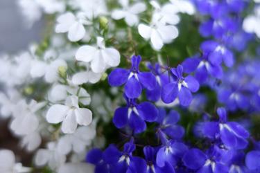 140522_flowers.jpg