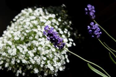 140526_flowers.jpg