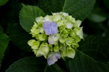 140529_flowers.jpg