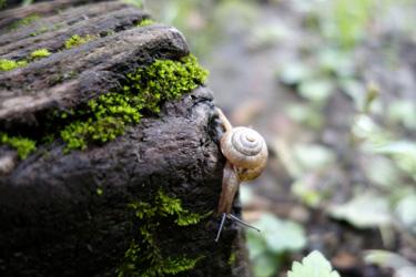 140605_snail.jpg