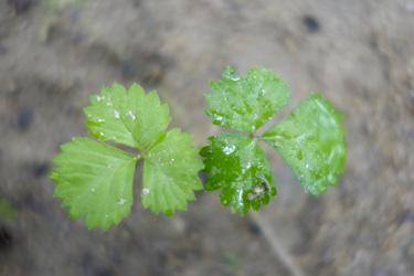 140609_floating_leaves.jpg