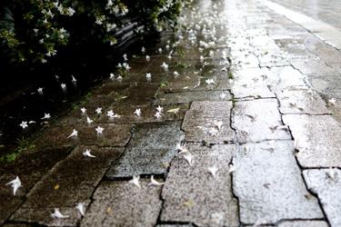 140619_fallen_flowers.jpg