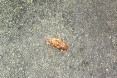 140704_cicada.jpg