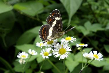 140717_butterfly.jpg