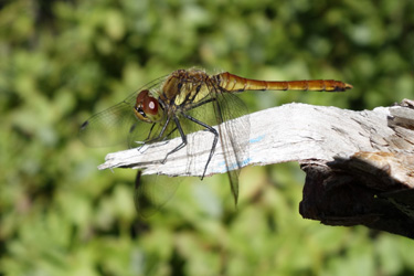 140731_dragonfly.jpg