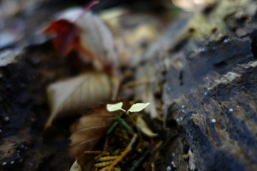 140906_young_leaves.jpg