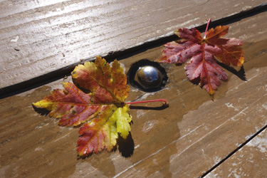 140909_autumn_leaves.jpg
